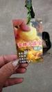 花花世界_水果苗--蜜糖波羅蜜-- 麻糬種蜜糖波羅蜜/4吋盆/高30-50cm/Tp