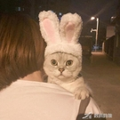 寵物頭套 貓咪頭飾寵物帽子頭套兔子狗狗可愛搞笑搞怪飾品衣服貓用品兔耳朵 樂芙美鞋