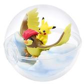 【寶可夢飼育球5】寶可夢 飼育生態球 擺飾 盒玩 皮卡丘 第五代 日本正品 該該貝比日本精品 ☆