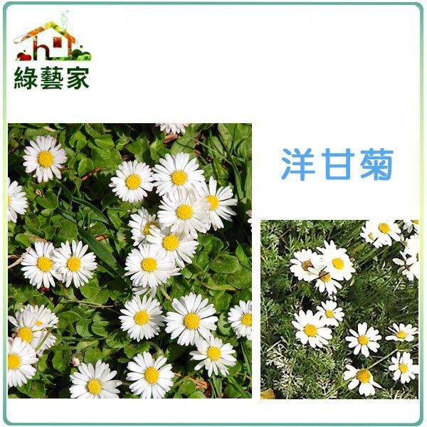 【綠藝家】K03.洋甘菊種子(德國洋甘菊)300顆