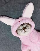 雙11限時優惠)搞笑貓咪衣服秋冬裝幼貓小貓貓寵物加菲貓無毛英短女新年鉅惠