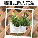 【JIS】N137 自動吸水 加厚植物牆...
