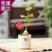 迎光 月老陶瓷植栽【免運直出】