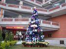 聖誕樹12呎聖誕樹(裸樹)360CM高(不含燈飾及飾品)聖誕帽聖誕燈聖誕金球聖誕服聖誕