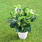 仿真花綠植綠葉綠蘿萬年青盆景小盆栽塑料花假花草植物裝飾品擺件·享家