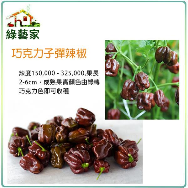 【綠藝家】G83.巧克力子彈辣椒種子5顆