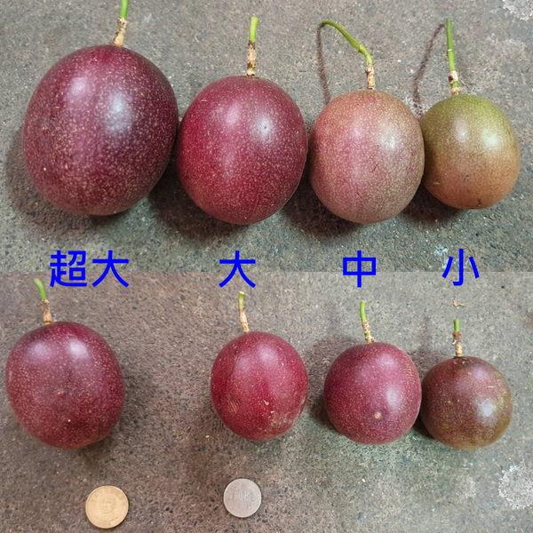 百香果-十斤裝/超值箱★特惠價★