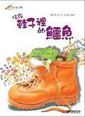 (二手書)住在鞋子裡的鱷魚