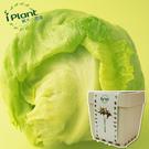 iPlant 積木小農場 - 萵苣 蔬菜盆栽 台中花博紀念品【心安購物】