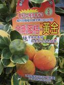 水果果苗 ** 金剛蜜桔 (黃金) ** 1尺盆/高40-60cm/營養酸甜好吃喔【花花世界玫瑰園】R