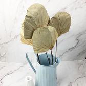 進口乾燥天然扇形荷葉-乾燥花圈 乾燥花束 不凋花 拍照道具 室內擺飾 乾燥花材-50元/支