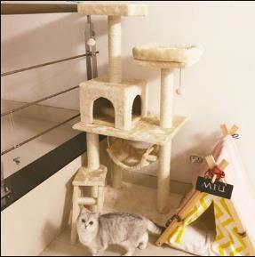 貓爬架 貓窩貓樹一體帶窩貓抓板跳臺別墅貓咪爬架用品貓抓柱貓架子