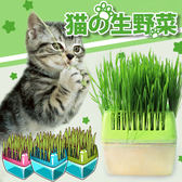 【Miss.Sugar】貓薄荷草 30g MIT台灣製造 貓草 幫助腸胃蠕動 排出毛球 貓零食 貓【G00327】