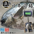 【海肉管家-全省免運】日本巨無霸4XL白...