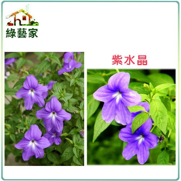 【綠藝家】H18.紫水晶(藍色,高25~40cm)種子20顆
