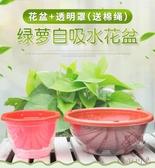 花盆大號塑料透明罩自動吸水花盆綠蘿專用【櫻田川島】