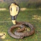 《MOJO FUN動物模型》動物星球頻道獨家授權 -眼鏡蛇