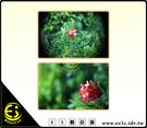 Sony NEX3 NEX5 NEXC3 NEX6 NEX7 專用 CCTV C-mount 25mm/F1.4 35mm F1.7 雙鏡頭雙鏡 轉接環