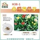 【綠藝家】H38-1.非洲菊種子8顆...