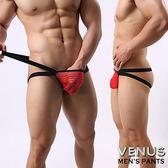 【魔法之夜】   VENUS 網紗條紋 男士雙丁 性感情趣 透明丁字褲 紅