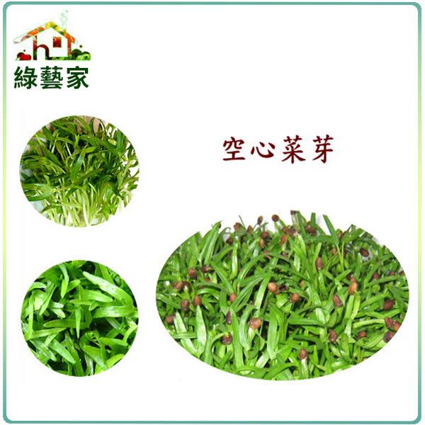 【綠藝家】大包裝空心菜芽種子300公克(空心菜芽菜種子)