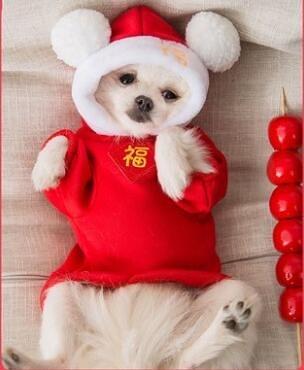 狗狗冬季衣服泰迪比熊博美小型犬貓咪寵物法斗秋冬裝新年冬天保暖