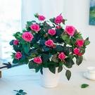 玫瑰仿真干花客廳家居擺設盆栽套裝飾品擺件...