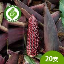 產銷履歷鮮綠黑寶玉米20支含運組