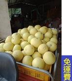 小箱老欉蜜白柚★花蓮鶴岡無毒農業11月水果★10斤 過年年終春節禮盒