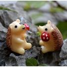 拿蘑菇小刺蝟微景觀 盆栽裝飾【A0050...