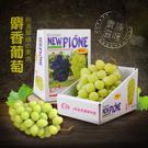【屏聚美食】空運日本頂級麝香葡萄1串禮盒...