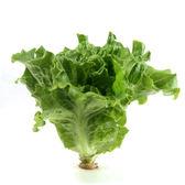 預購 水耕蔬菜-義大利生菜(150g)
