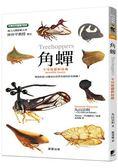 角蟬 不可思議的昆蟲