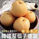 【果之蔬-全省免運】韓國梨仙子X1箱(7-9顆/箱 每箱約5kg±10%含箱重)