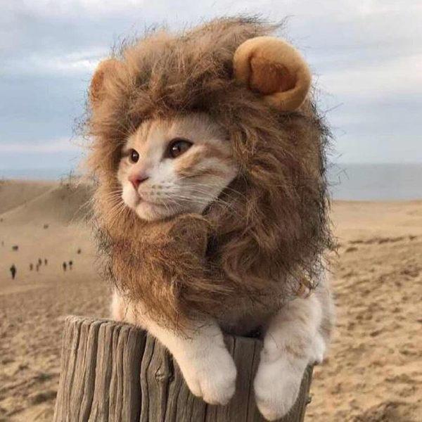 貓咪頭套寵物帽子狗狗變身小獅子【聚寶屋】