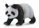 柯雷塔collectA 英國PROCON 動物系列 大熊貓 TOYeGO 玩具e哥