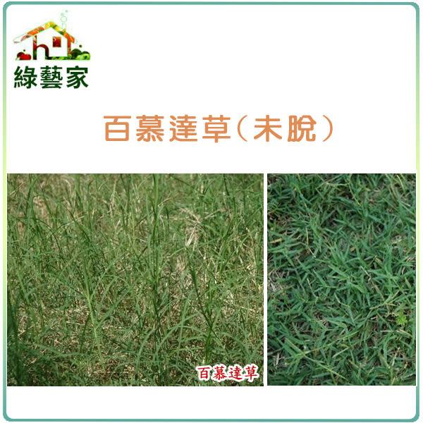 【綠藝家】百慕達草種子(未脫殼)1公斤裝