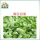【綠藝家】大包裝A03.青江白菜種子40...