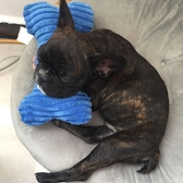 寵物玩具 狗狗枕頭磨牙發聲玩具泰迪金毛法斗柯基幼犬玩具拖鞋骨頭寵物用品 - 雙十二交換禮物