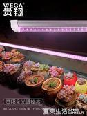 多肉補光燈上色全光譜LED蔬菜花卉育苗食蟲草仿太陽植物生長燈『夏茉生活』