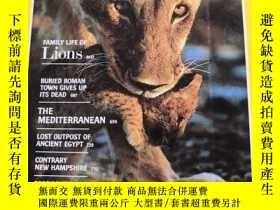 二手書博民逛書店罕見NATIONAL GEOGRAPHIC FAMILY LIFE Of Lions1982 12(美國國家地理