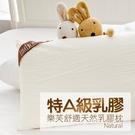 枕頭 / 乳膠枕【樂芙舒適天然乳膠枕 (平面)】 100%天然透氣乳膠 戀家小舖台灣製AEB204