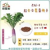 【綠藝家】C16-1.紅金交蘿蔔種子5.8克(約500顆)
