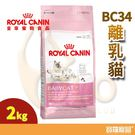 FHN皇家BC34離乳貓2kg【寶羅寵品】