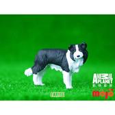 【Mojo Fun 動物星球頻道 獨家授權】 邊境牧羊犬 387203