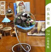 快速出貨-苔蘚微景觀生態瓶辦公室DIY玻璃盆景創意迷你綠植物龍貓盆栽擺件【限時八九折】