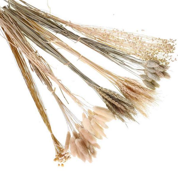 【BlueCat】天然乾燥 米色兔尾草 乾燥花 拍攝道具 拍照背景 花材