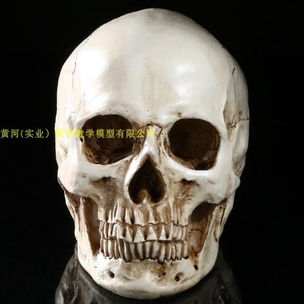 1:1樹脂骷髏頭繪畫人頭骨藝用人體肌肉骨骼解剖頭骨模型美術 現貨