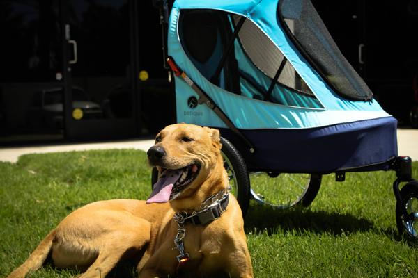 寵物推車 百嬌客全方位運動推車  限宅配 推車 運動推車 寵物周邊 寵物 狗狗