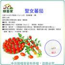 【綠藝家】G86.聖女蕃茄3顆(專業栽培聖女品種.農友種苗出產.非自採自收種子)
